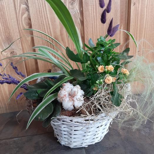 Композиция Подарок 1: букеты цветов на заказ Flowwow