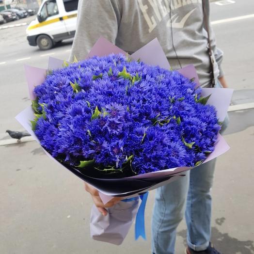 Букет из 501 василька: букеты цветов на заказ Flowwow