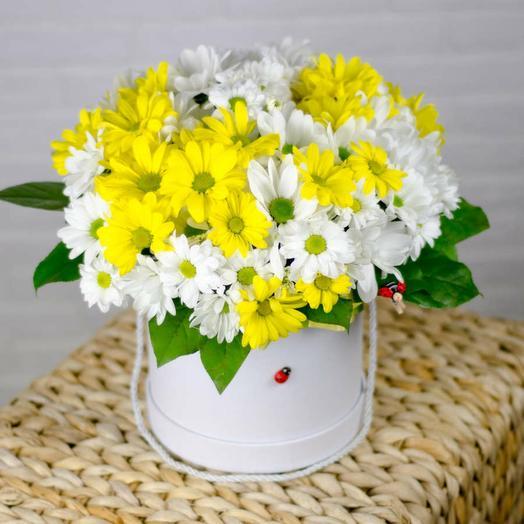 Цветы в коробке Ромашки с зеленью