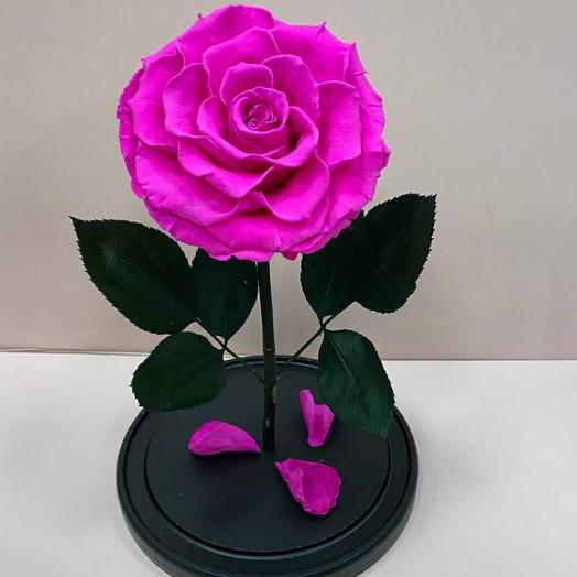 Роза в колбе  ( фукси ) премиум
