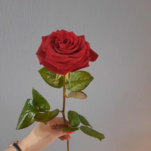 ROSE RED 70CM