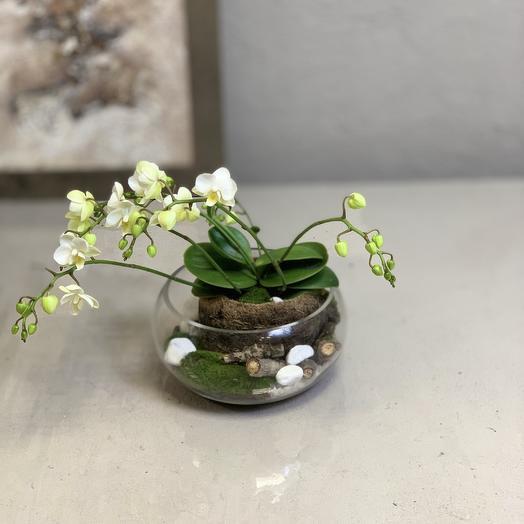 Белоснежная орхидея: букеты цветов на заказ Flowwow