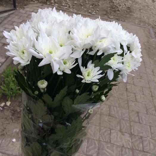 Хризантема Балтика