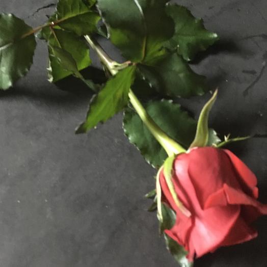 Роза красная 55см. Страсть, Любовь, Чувства