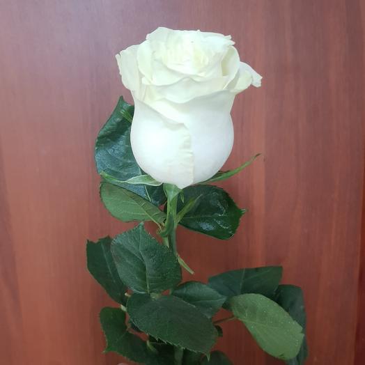 Белая роза Мондиаль