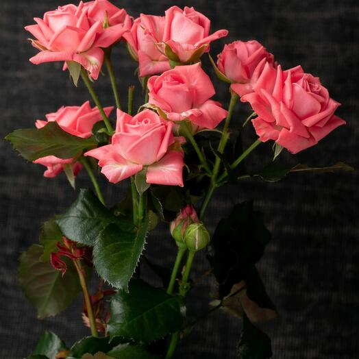 Барбад Bush Rose Barbados (qty any, branch)