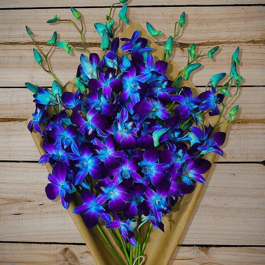 Космические орхидеи: букеты цветов на заказ Flowwow