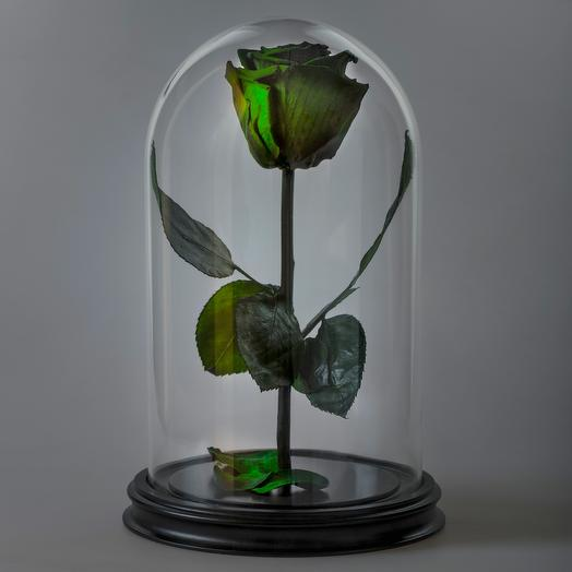 Роза в колбе зеленая премиум