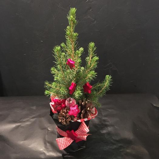 Подарок: букеты цветов на заказ Flowwow