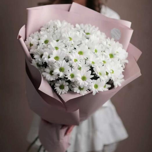 "Chrysanthemum ""Chamomile"" 13 PCs"