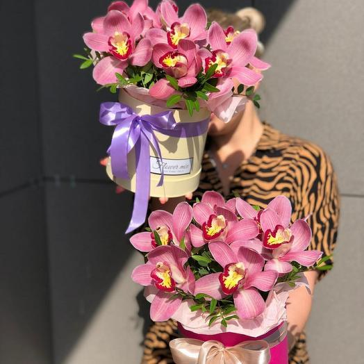Орхидейная экзотика