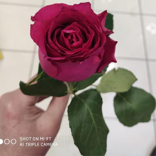 Роза 50см