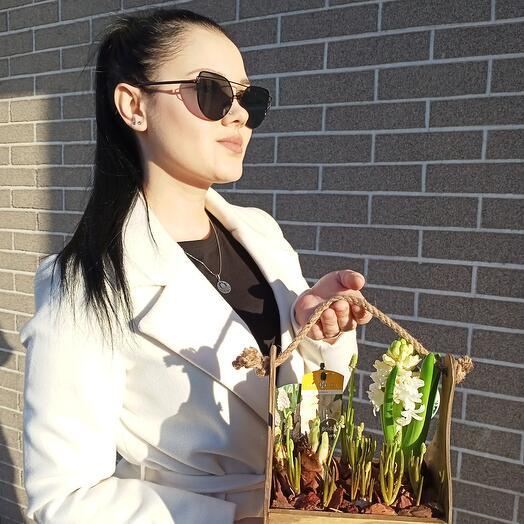Ящик с первоцветами