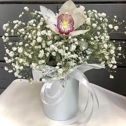 Милая орхидея