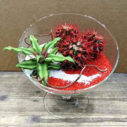Гармония кактусов: букеты цветов на заказ Flowwow