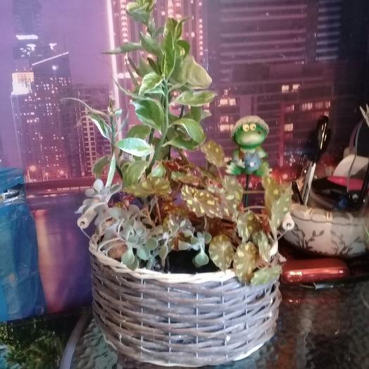 Композиция из горшечных растений: букеты цветов на заказ Flowwow