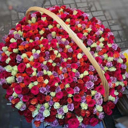 Радуга из 501 розы