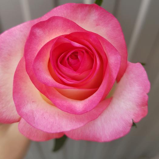 Роза-Джумиля