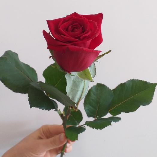 Роза Ред Игл, 50см