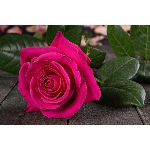 Роза сорта Пинк Флойд