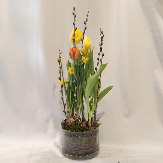 Праздничные тюльпаны
