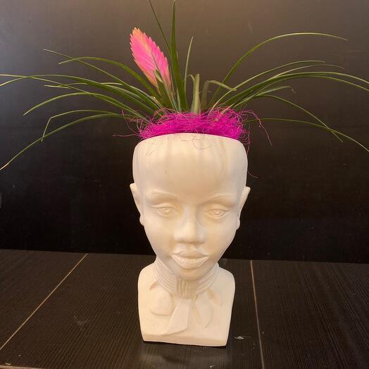 Комнатное растение бромелия в кашпо африканка