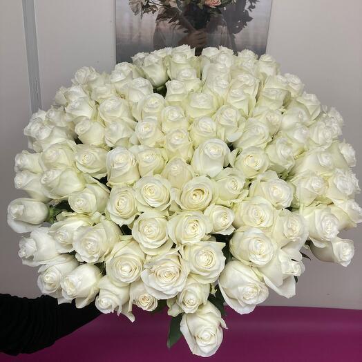 101 шикарная ароматная Роза