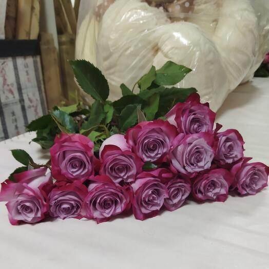 Розы Deep Purple
