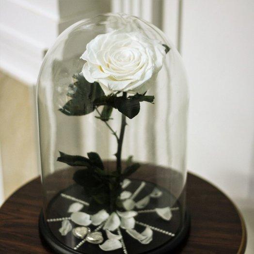 Большая стабилизированная роза в колбе: WHITE: букеты цветов на заказ Flowwow