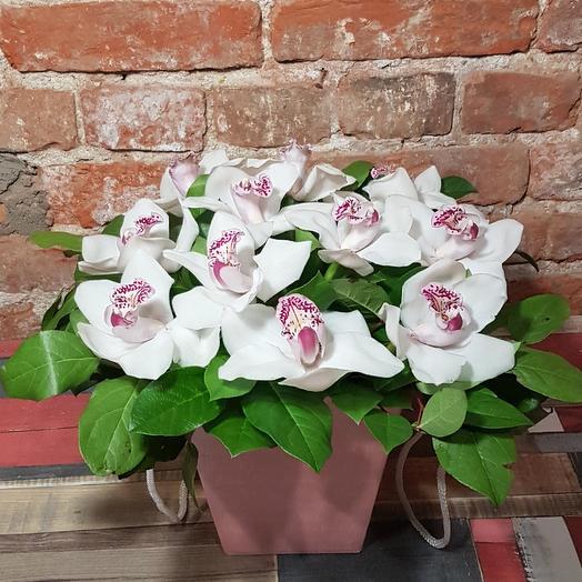 Орхидея ароматная: букеты цветов на заказ Flowwow