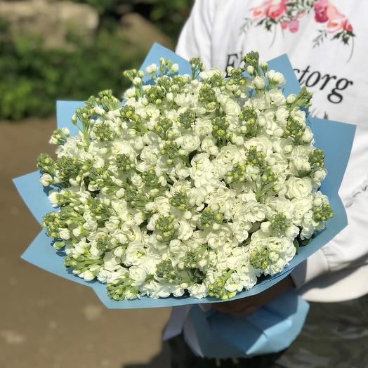 Букет из 51 белой маттиолы. N441: букеты цветов на заказ Flowwow