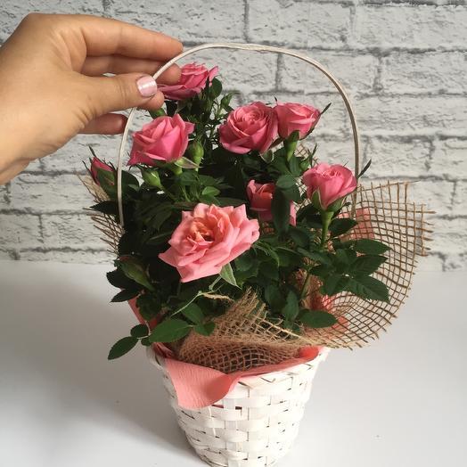 Товар месяца !Садовая роза в корзине: букеты цветов на заказ Flowwow