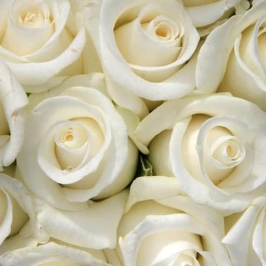 Роза Мечта: букеты цветов на заказ Flowwow