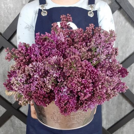 Королевский пурпур: букеты цветов на заказ Flowwow