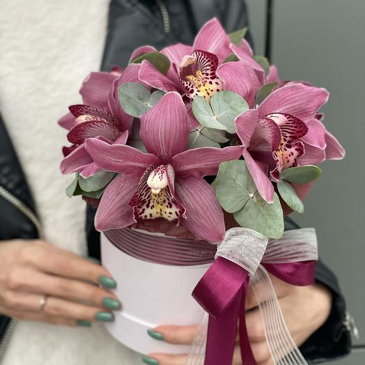 Box of Cymbidium Pink Claire
