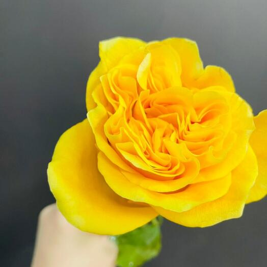 Роза Country Sun 40 см Эквадор