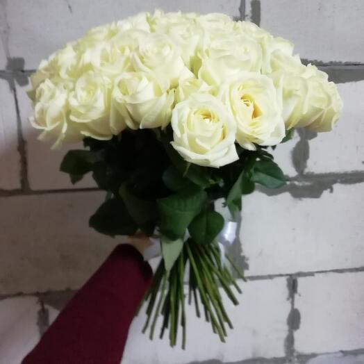 Rose 51