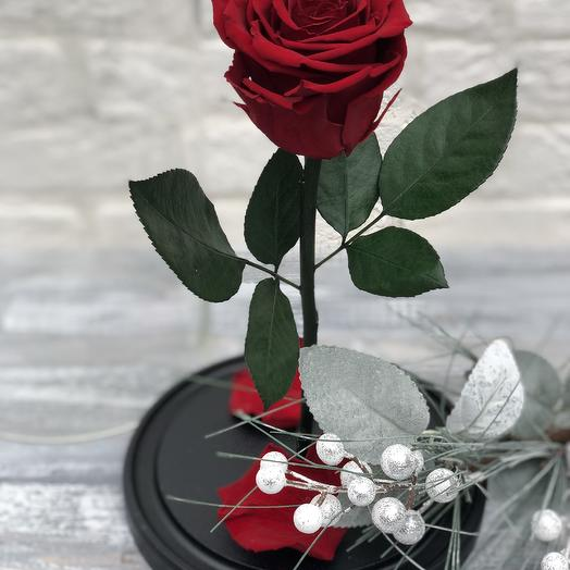 Роза в колбе Prime: букеты цветов на заказ Flowwow