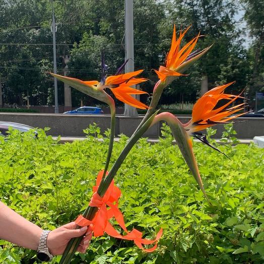 Экзотическая стрелиция: букеты цветов на заказ Flowwow