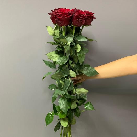 Розы Эксплорер 70 см