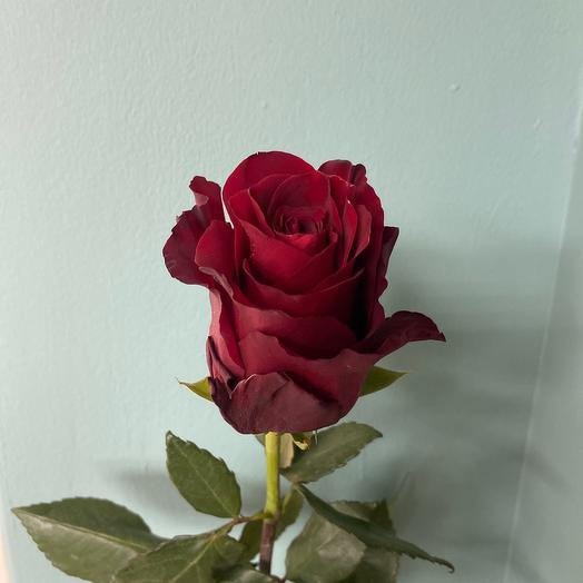 Роза Эквадор 90 см