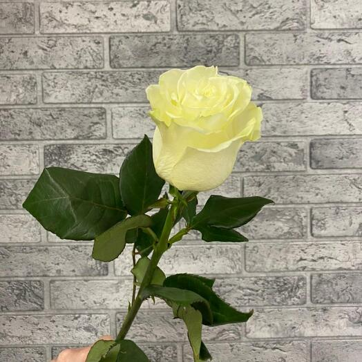 Роза VIP Premium Колумбийская 60 см