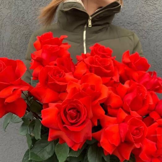 Кубинские розы «Куба Рэд»