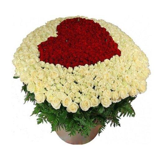 501 бордово-белая роза в кашпо