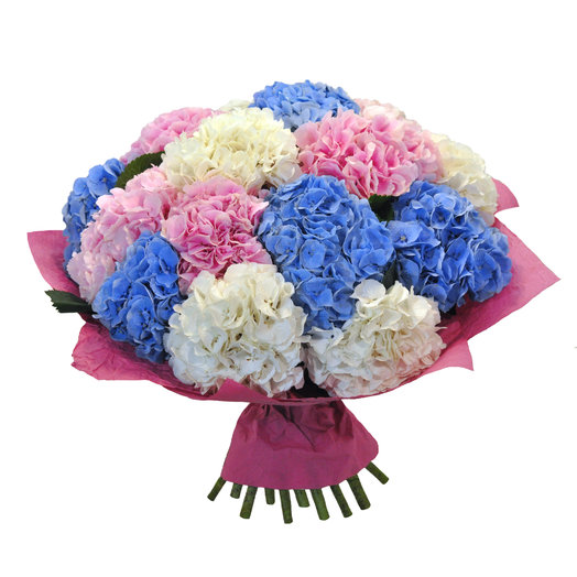 Букет из 15 гортензий: букеты цветов на заказ Flowwow