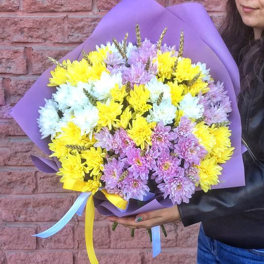 15 chrysanthemum mix
