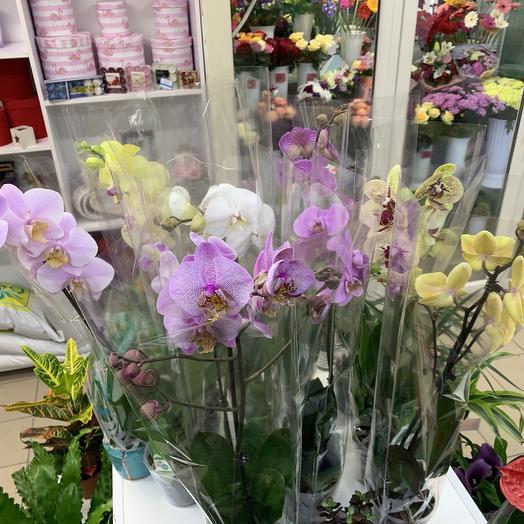 Доставка цветов нижневартовск орхидея, митино