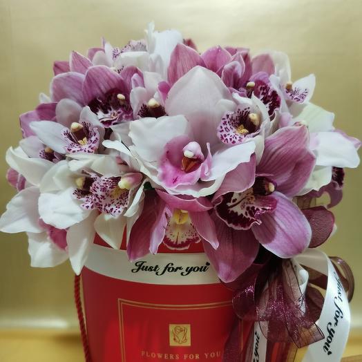 51 орхидея в аквабоксе