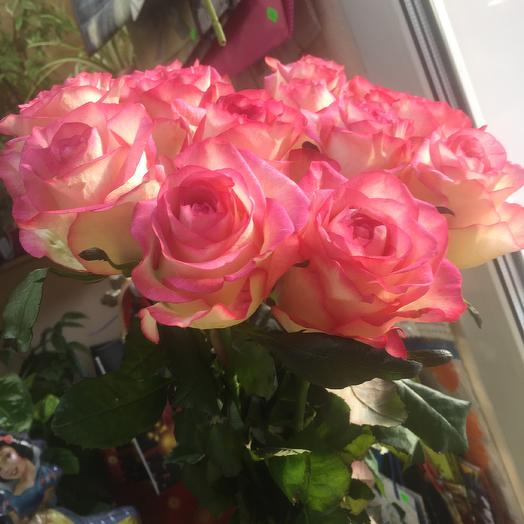 Роза Джамила 11