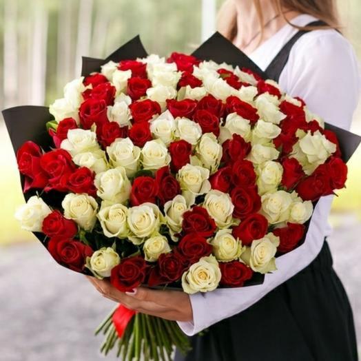 51 отборная роза красного и белого цвета
